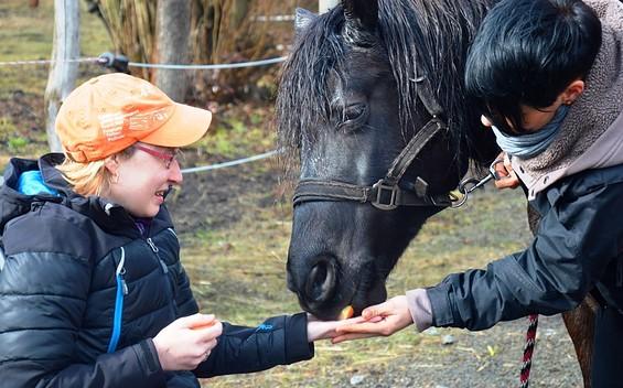 FamilienCampus LAUSITZ-PferdeGut
