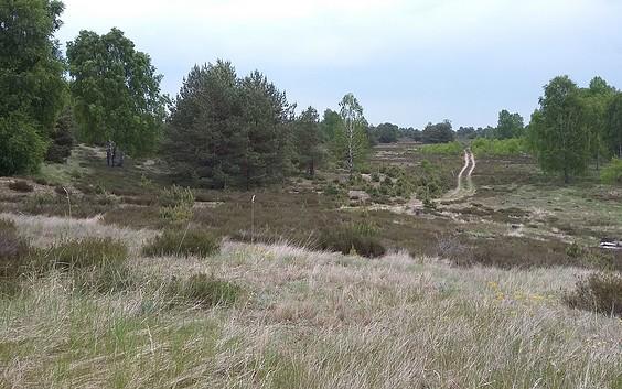 Natur- und Landschaftsführungen durch die Wittstock-Ruppiner-Heide