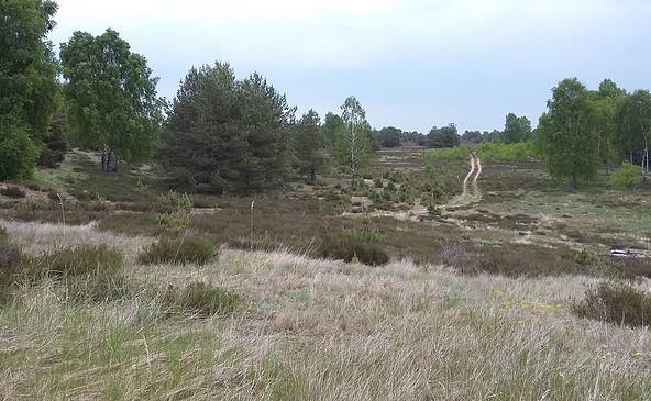 Die Kyritz-Ruppiner Heide, Foto: Michelle Engel