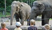 Elefanten Karla und Sundali, Foto: Tierpark Cottbus