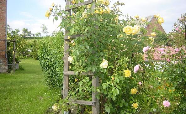 Ferienwohnung Többe-Wehberg in Liepe, Foto: Karin Többe-Wehberg