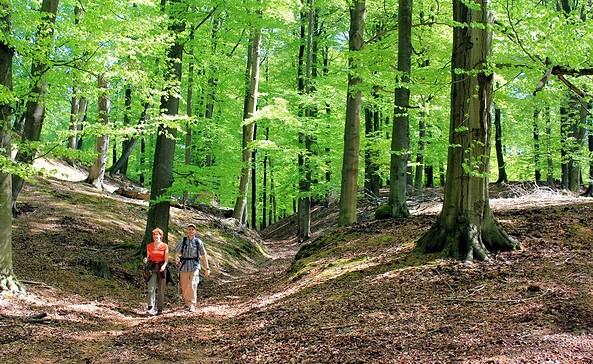 Findlingswanderweg - Wanderung durch die Springer Rummel, Foto: Bansen/Wittig