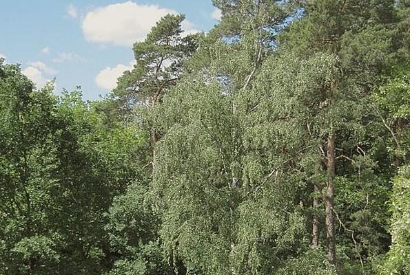 Parkeingang-Ost, Foto: Kurpark Wildau