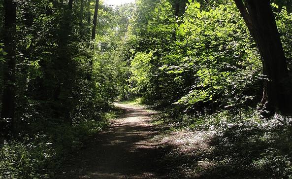 Grüne Idylle am Schwielochsee, Fot: TEG