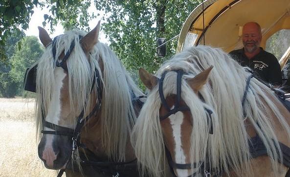 Spike und Alf - Kutschfahrten Schott, Foto: Harald Schott
