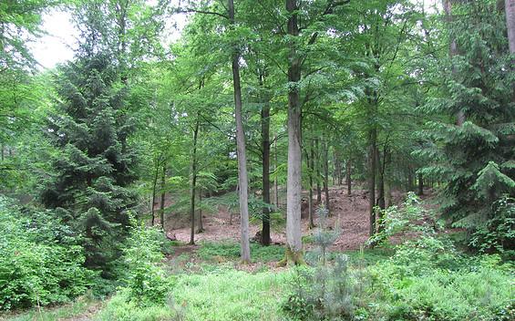 Naturschutzgebiet Flämingbuchen
