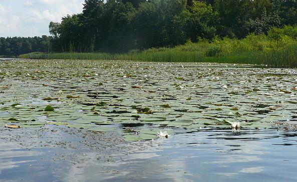 Einfahrt zum Springsee, Foto: Seenland Oder-Spree e.V.