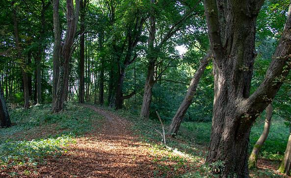 Wandern auf dem Burgwall, Foto: TMB-Fotoarchiv/ScottyScout