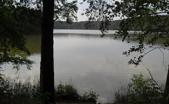 Natur Pur am Raduschsee, Foto: TEG