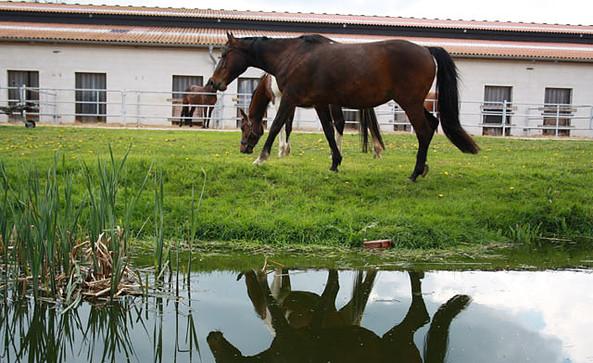 Wohnmobilstellplatz und Ferienwohnungen auf dem Pferde- und Ferienhof Schörfke