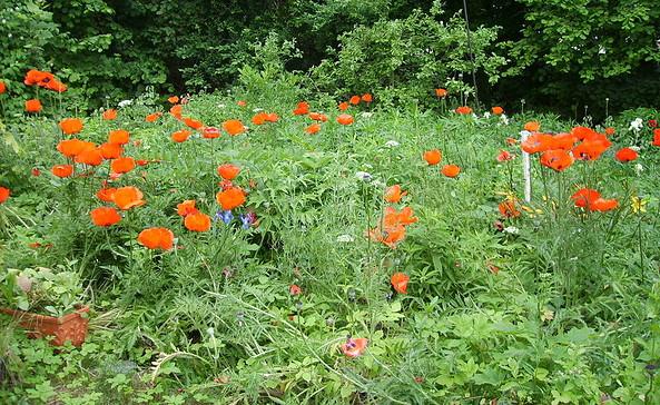 Blick in den Garten, Foto: Kornelia Eberhardt