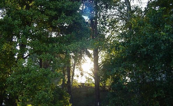 Abwechslungsreiche Landschaft und verschiedenste Pflanzenformationen, Foto: TEG