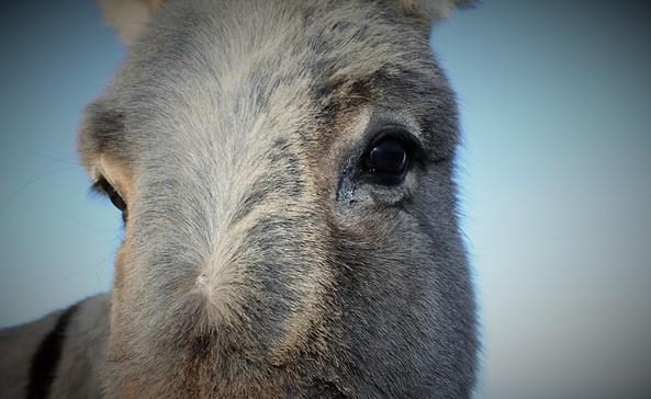 Wanderungen mit Eseln in Brandenburg