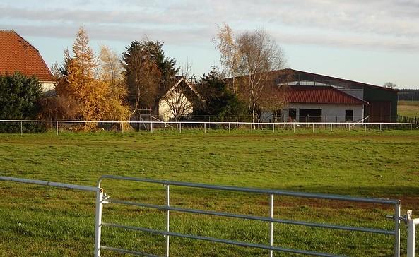 Pferde- und Ferienhof Schörfke - Lewitzerzucht