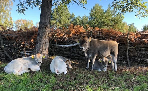 Naturnahe Tierwirtschaft auf Sommers Hof, Foto: Silke Hildebrandt