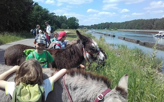 Eselwanderungen und Wildkräutererlebnisse