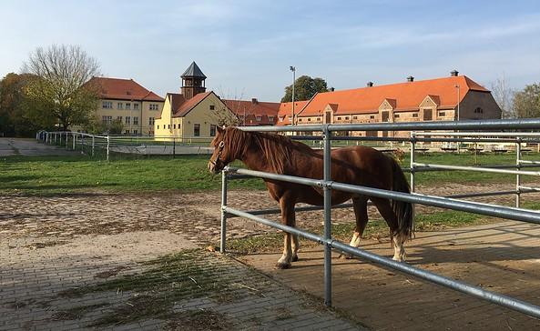 Reitgut Bodddinsfelde, Foto: Tourismusverband Dahme-Seenland e.V./Petra Förster