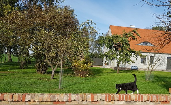Haus mit Katze, Foto: S. Pogorzelski
