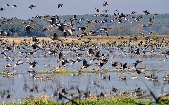 Vogelbeobachtungsturm Ungeheuerwiesen