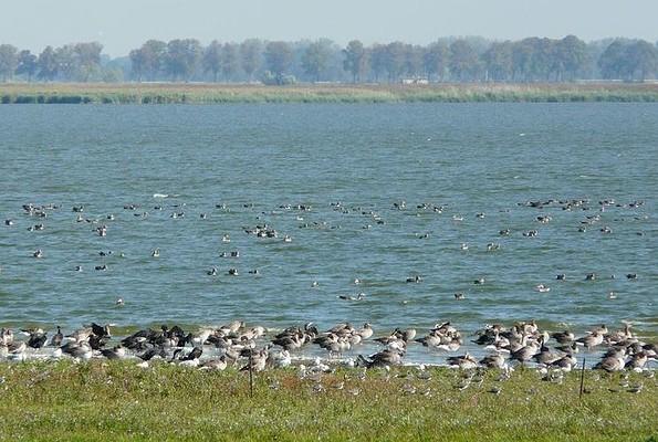 Vogelzug am Gülper See, Foto: TMB/Bleeck