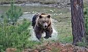Bär im Wildtierpark Johannismühle, Foto: Wildpark Johannismühle
