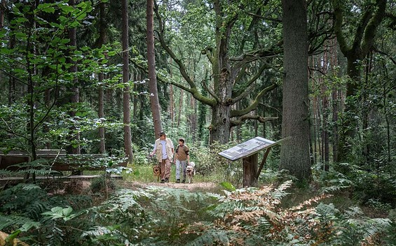 """3. Etappe Rundwanderweg """"Rund um die Schorfheide"""""""