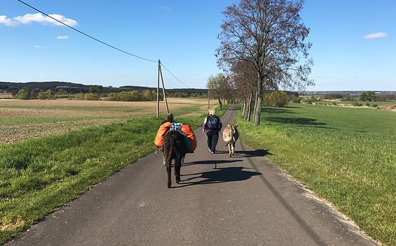 Eselwandern in der Uckermark mit celine aktiv reisen