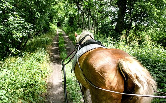 Urlaub im Planwagen & Tagestouren mit der Kutsche mit Liesje Trecking