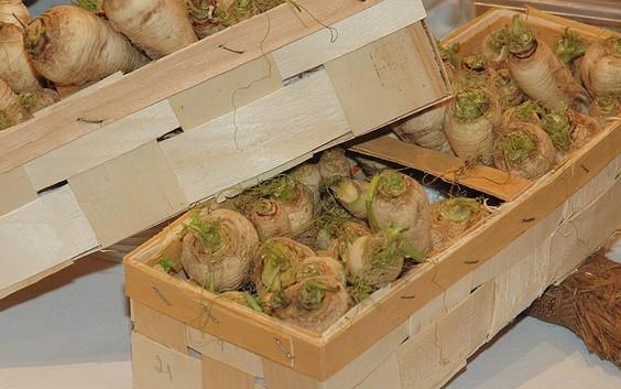 Obst- und Gemüsehof Teltower Rübchen
