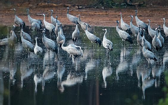 Vogelbeobachtung im Naturparadies Grünhaus