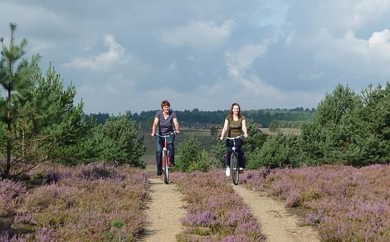 Eine Heidetour ins violette Naturschauspiel