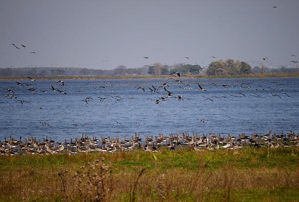 Vogelzug am Gülper See, Foto: Tourismusverband Havelland e.V.