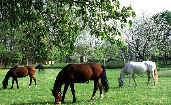 Pferde, Foto: Tourismusverband Seenland Oder-Spree e.V.