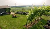 Weinberg Schlieben, Foto: TV Elbe-Elster-Land