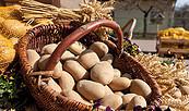 Kartoffeln vom Kartoffelhof Gerlind Neumann, Foto: Julia Otto