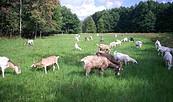 Ziegenhof Heidesee, Foto: Tourismusverband Dahme-Seen e.V.