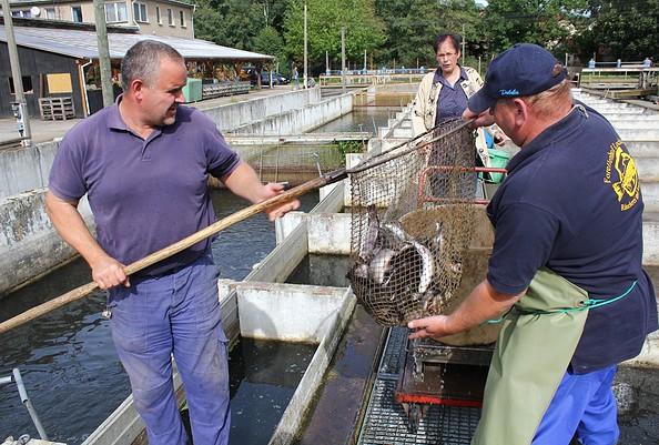 Fischer vom Forellenhof Locktow bei der Arbeit, Foto: Bansen