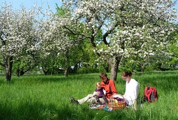 Picknick während der Obstblüte, Foto: TV Elbe-Elster-Land