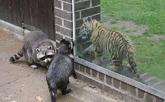 Film Animal Academy, Harsch Zoo