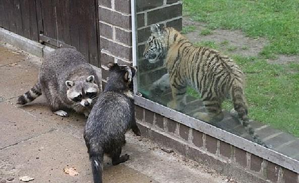 Tierpark der Filmtierschule Harsch, Foto: Filmtierschule Harsch