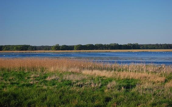 Vogelbeobachtungsturm am Streng (Rietzer See) bei Netzen