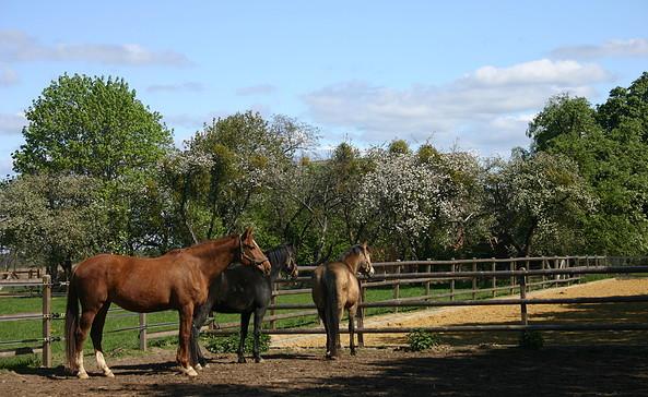 Pferdekoppel im Ruppiner Seenland, Foto: TV Ruppiner Seenland e.V.