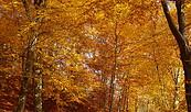 Herbstwanderung im Schlaubetal, Foto: Sofie-Helen Schulze