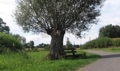 Spreewald-Rundtour