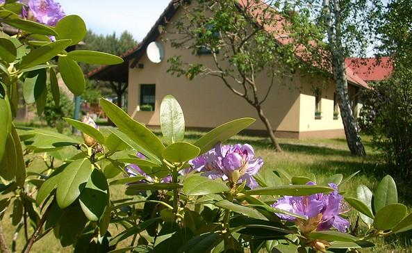 Ferienhaus Gollin