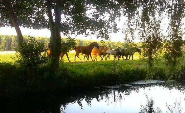 Pferdepension & Ausbildungsstall