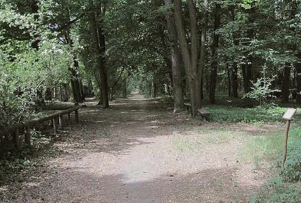 Lichtung, Foto: Kurpark Wildau