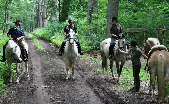 Reiter im Wald, Foto: Monique Müller