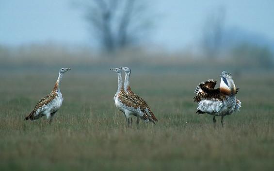 Vogelschutzwarte Buckow mit Beobachtungstürmen