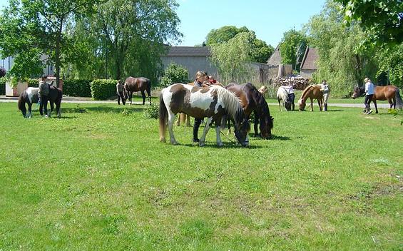 Ponyfarm Anne-K. Bendix